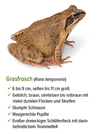 Freistellung - stb_Grasfrosch.jpg