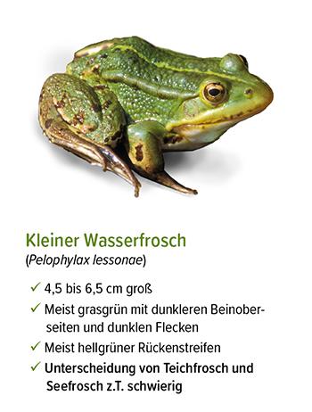 Freistellung - stb_Kleiner_Wasserfrosch.jpg