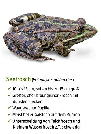 Freistellung - stb_Seefrosch.jpg